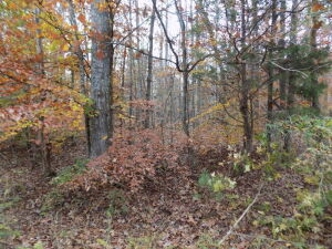 5.94 Acres * Wooded * Creek Footage
