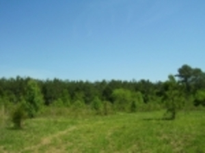 Property 203:  11.7 +/- Acres in Rock Spring, GA