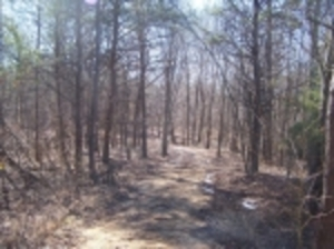 Property 102-12.4 +/- Acres in Cloudland, GA