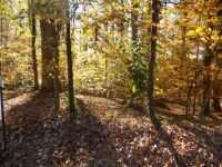 Online Only Real Estate Auction1.81 Acres +- Residential LotBrookwood Lane – Oak Park Subdivision – LaFayette, GA. Walker Co.Bid Opens Nov. 25th & Bid Ends Dec. 10thLocation:  From US Hwy 27 Bypass, Go West on Werthen St., then Left on Meadowbrook, then r - 3